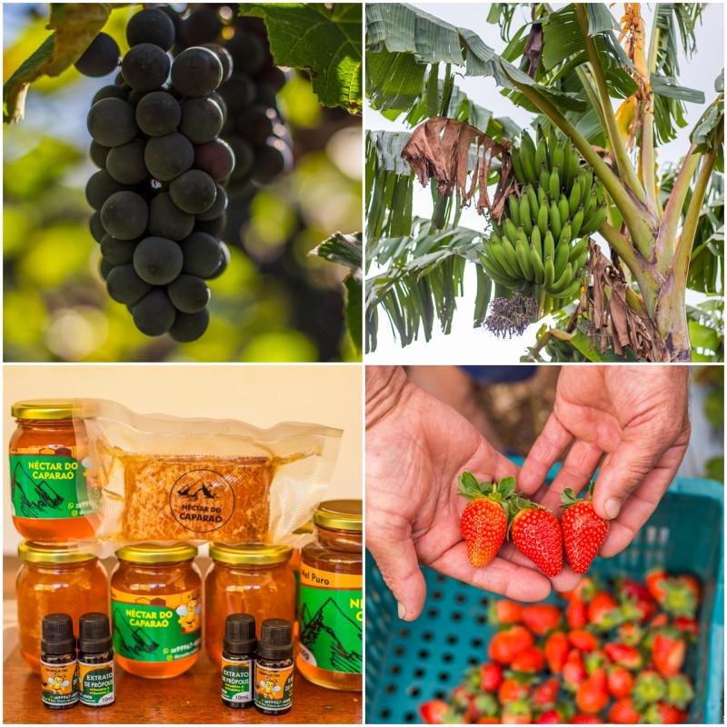 Produtores de Irupi investem em Diversificação Agrícola